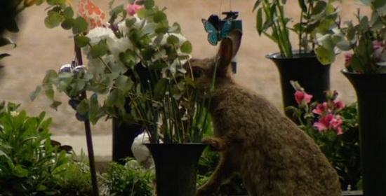 Begraafplaats Crooswijk konijnen