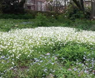 Eeuwfeest Botanische Tuin 1913-2013