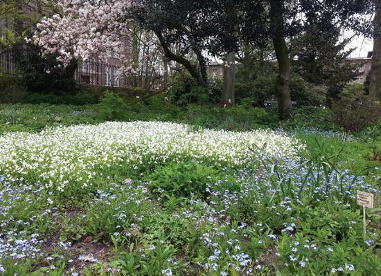 Eeuwfeest Botanische Tuin
