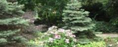 Wandeling – Kralingen met Arboretum