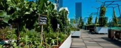 Verborgen Tuinen – groene ontdekkingsreis door Rotterdam