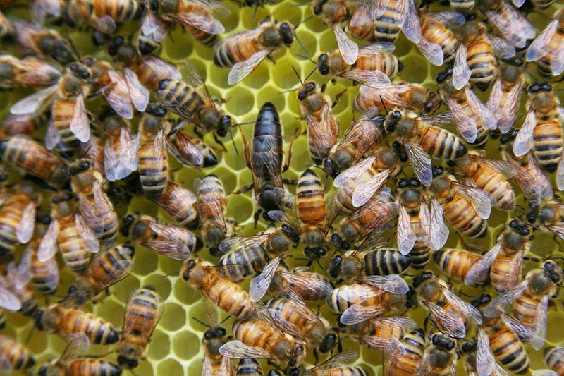 Het gaat ietsje beter met de bijen