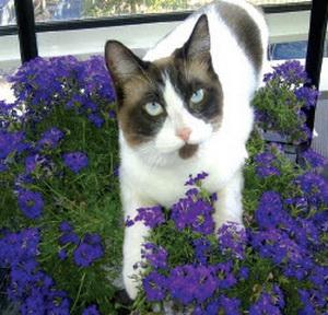 Kat Oscar van balkon gevallen en zoek