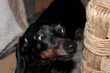 'Door de Minimax Dierendokter kan ik mijn hond houden'