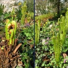 Activiteiten botanische tuin kralingen op 1 september de for De tuin kralingen