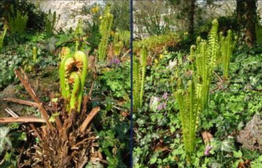 Activiteiten Botanische Tuin Kralingen op 1 september