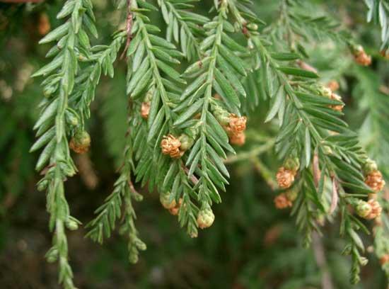 Bijzondere boomverplanting Sequoia naar Trompenburg