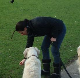 Hondenpoep op straat: ergernis nummer 1
