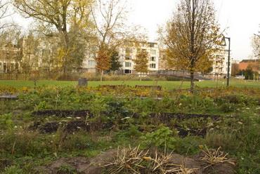 Kralingen krijgt eerste voedselbos van Nederland