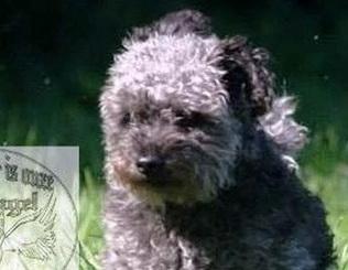 Hond ontsnapt aan uitlaatservice in Kralingse Bos