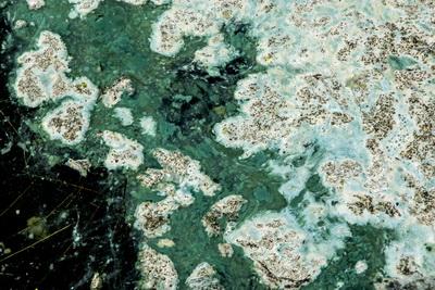 Weer blauwalg in de Kralingse Plas