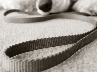 Hondenriem wordt slachtoffer Capels liftongeluk fataal