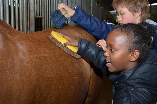 200 Rotterdamse kinderen gaan Werken als een Paard