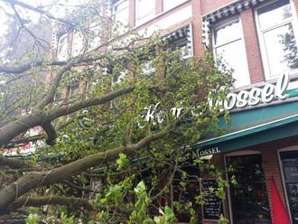 Boom valt op terras brasserie Kaat Mossel