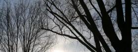 Wat is het geluid van het Kralingse Bos?