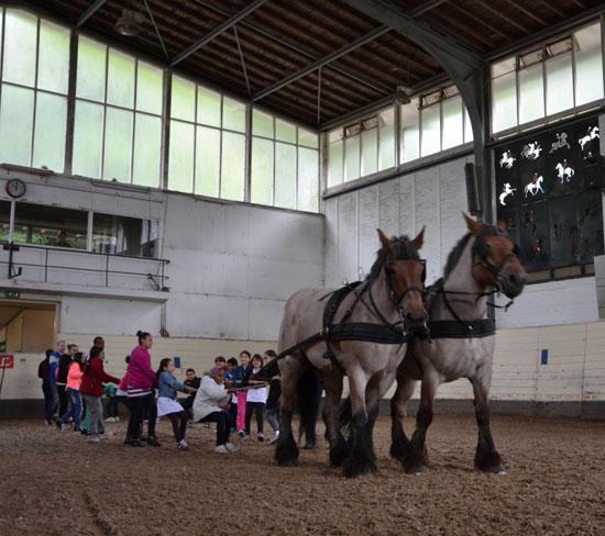Kinderen Vakantieschool maken kennis met paardensport