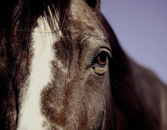 Cursus Paard & Welzijn voor Ouder en Kind
