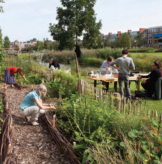 de groenten uit de buurtmoestuin (S)Moes in Park de Nieuwe Plantage