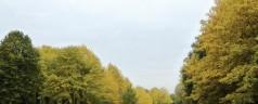 Meer dan 200 bomen worden gekapt