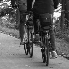 Glow-in-the-dark fietspad in het Kralingse Bos