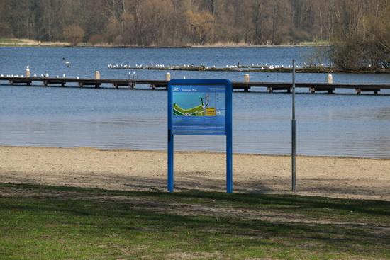 Rotterdam gaat waterplanten maaien in Kralingse Plas