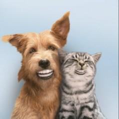 Workshop 'Tandverzorging hond en kat'