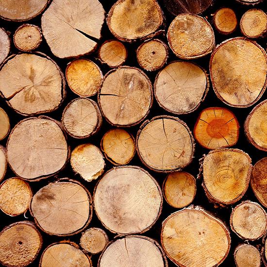De Bomenridders boos over bomenkap Prinsenland