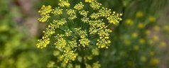 Wandeling bij Trompenburg met als thema Botanische Gastronomie