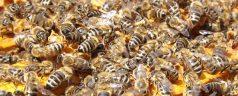 Evides plaatst eerste bijenhotel in Kralingen