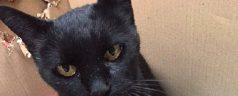 De kat (van ome Willem) is op reis geweest..