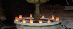 Lichtjesavond in de Botanische Tuin Kralingen op 16 december