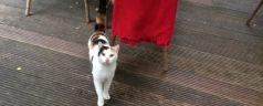 Herkent u deze kat in Trompenburg?