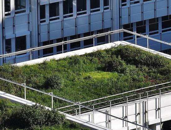 Uitbreiding groene daken Erasmus Universiteit