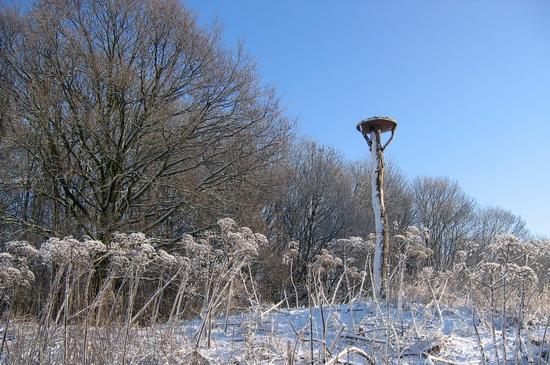 (Over)leven in de winter