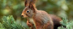 Het grote eekhoornmysterie in het Kralingse Bos