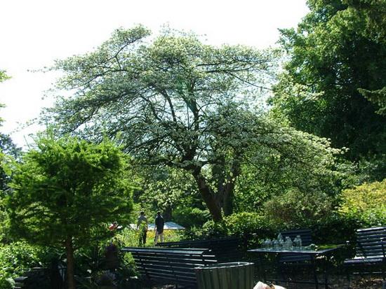 Lentefeest in Botanische Tuin Kralingen