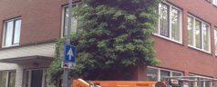 Brief aan burgemeester Aboutaleb over verwijderen klimhortensia IJsclubstaat
