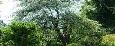 Midzomerfestival: Botanische Tuin Kralingen doet mee!