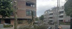 Omgewaaide boom bij De Plantage – Kralingen