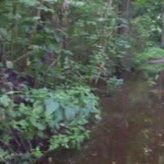 Kapotte waterleiding zorgt voor wateroverlast Kralingse Bos