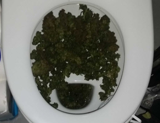 Man probeert kilo's hennep door toilet te spoelen in Prins Alexander