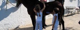 Kennismaking met de paardensport en historische hippische locatie