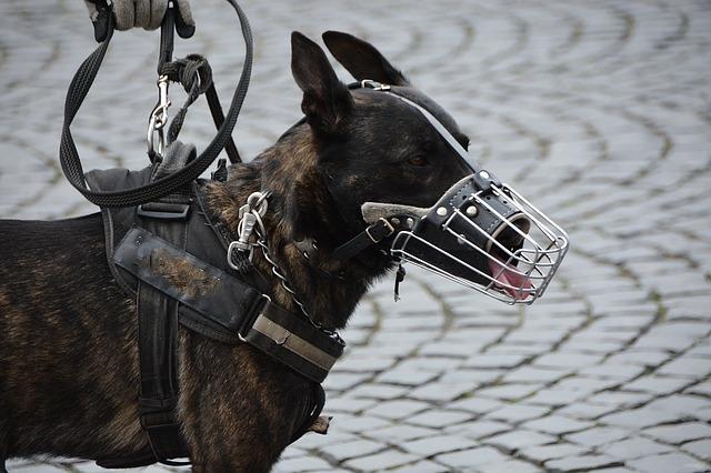 Politiehonden houden inbrekers aan op Zwart Janstraat
