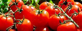 Petitie schrap BTW op biologische producten
