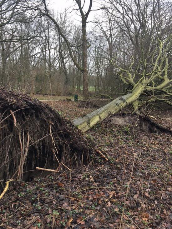 'Oud worden in het Kralingse Bos is een luxe'