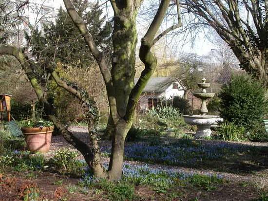 Vier het voorjaar in de Botanische Tuin Kralingen