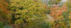 (Na)zomer in de Botanische Tuin Kralingen