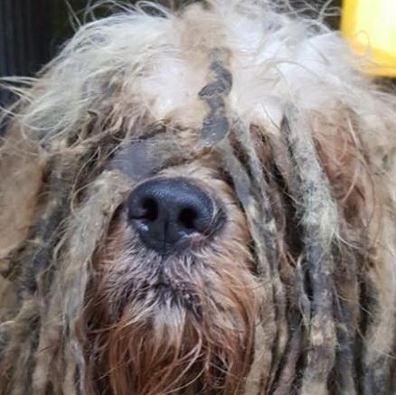 Zwaar verwaarloosd hondje Bob uit Kralingen maakt veel reacties los