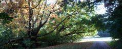 Het oude bos. Een bijzonder kerstsprookje