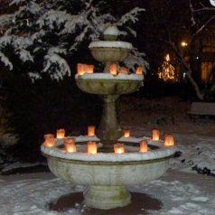 Vrijdag 14 december: Lichtjesavond in de Botanische Tuin Kralingen